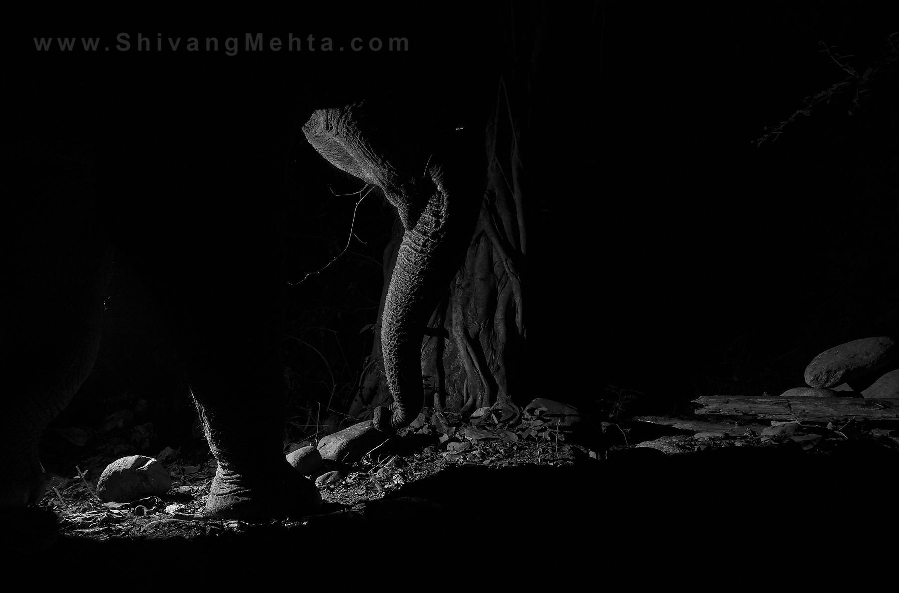 Art and Documentary Photography - Loading _V5C0326_copy.jpg