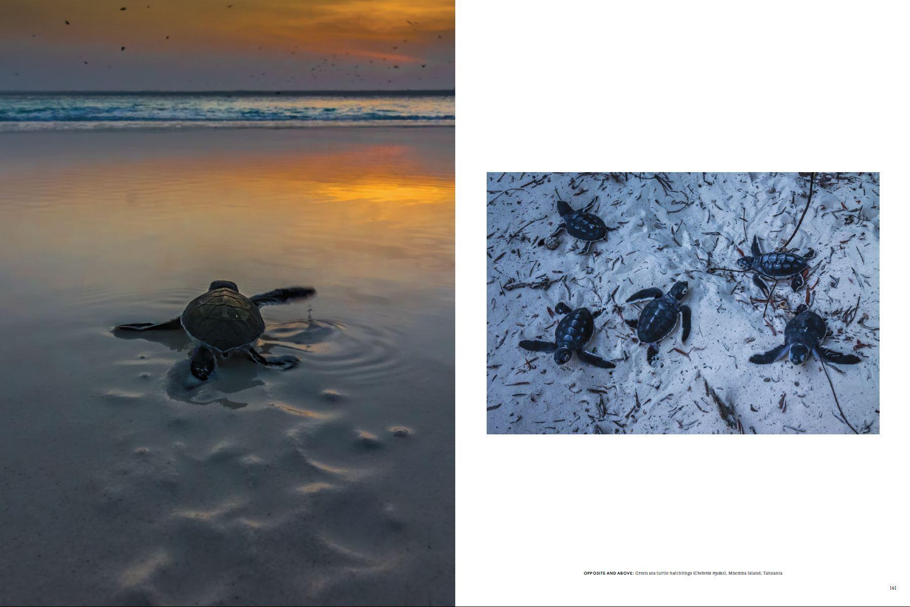Art and Documentary Photography - Loading NOE_turtles.JPG